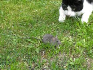Konzentration auf die Maus