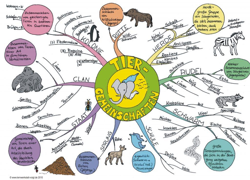 Tiergemeinschaften- Mindmap